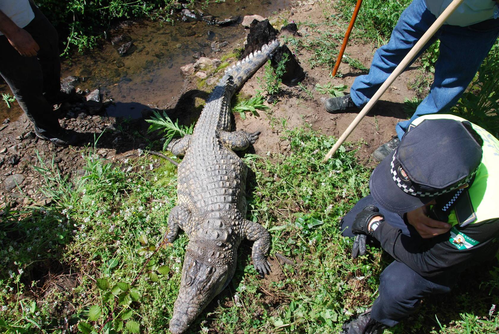 Hallan muerto al cocodrilo de la laguna de MIjas